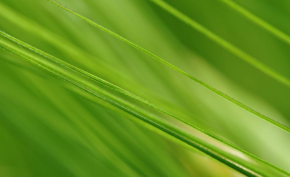 Der grüne Stoff der Zukunft - Chlorophyll in Gerstengras